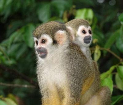 beste tijd om naar Suriname te reizen